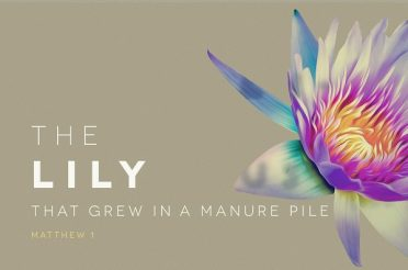 The Lily That Grew in a Manure Pile